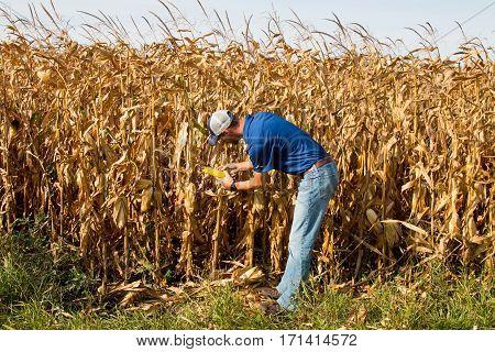 Farmer Inspecting Corn Field
