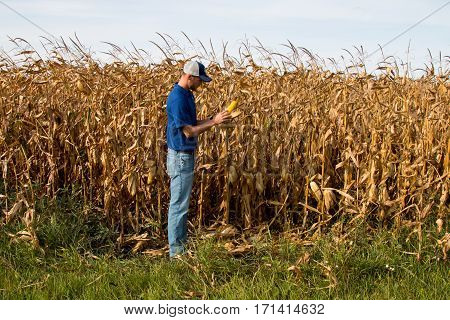 Agronomist Inspecting Mature Crops with a Tablet