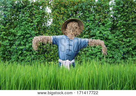 Thai scarecrow in the green rice field