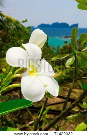 Idyllic Blossom Tropical Verdure