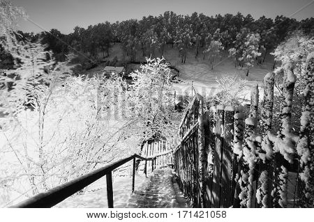 Black and white art photography monochrome fabulous night winter forest in the snow. Winter time. Heavy snowfall. Beautiful landscape. Stairs to the hill. Mountain landscape
