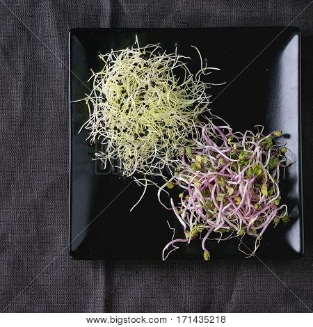 Plate Of Fresh  Sprouts