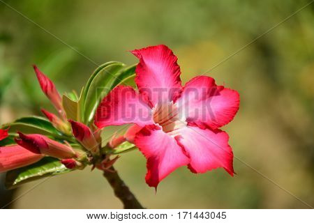 Beautiful flower background and view of bright red flower blooming in the garden