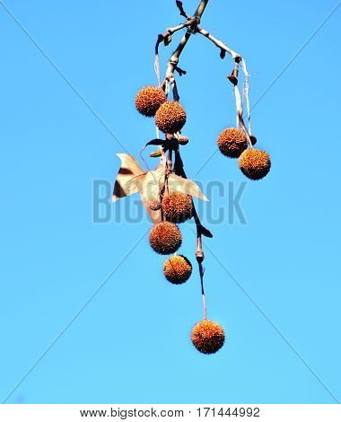 Tree balls. Inedible fruit tree shaped ball and allergic.