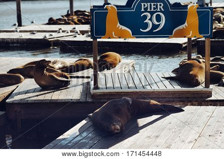 Sea lions on Pier 39 in San Francisco California USA