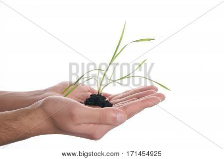 Human Hands holding sprout in new life concept on white .Copy space.