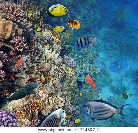 Colorful coral reef fishes of the Red Sea.