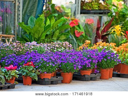 Flower market with variety of colourful flowers.