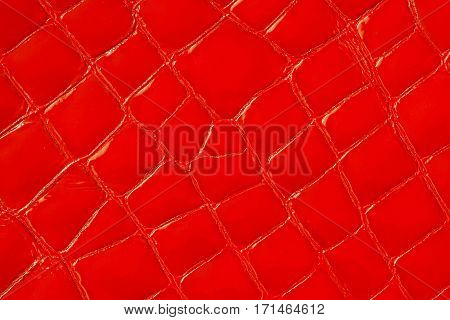 Texture of genuine patent leather close-up, embossed under the skin a vivid red crocodile. For modern pattern, wallpaper or banner design. With place for your text
