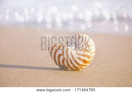 nautilus shell  on golden beach  sand and glitter seascape background