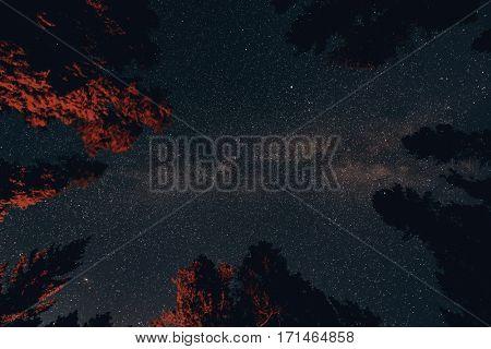 Milky Way in forest in Banff National Park