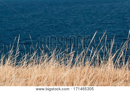 Background Of Highly Contrasted Dry Grass Against The Sea. Shallow Depth Of Field, Polarizing Filter