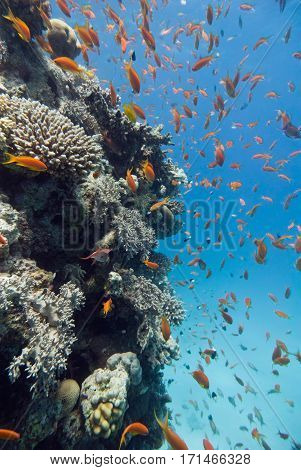 Marine Life On The Coral Reef, Wide Angle Shot