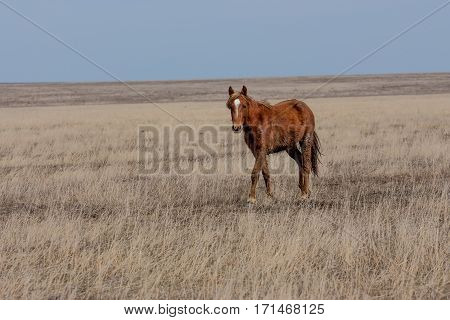 Foal grazing in natural environment on autumn steppe background