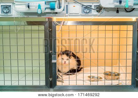 Convalescent cat in veterinary clinic gets treatnment and inpatient care