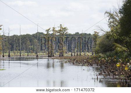 Lake Bayou
