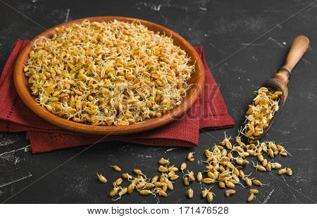Sprouted wheat germ in ceramic plate cloth. The wooden scoops with Sprouted wheat germ. Black worn background.