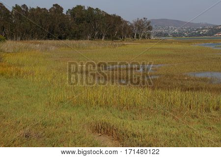View across grass, trees and estuary to mountains at Batiquitos Lagoon, Carlsbad, California
