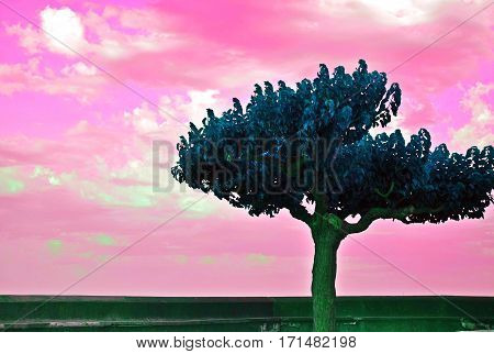Beautiful tree and soft pink sky heaven dreamy atmosphere photo with reversed colors