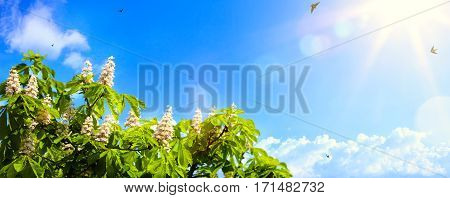art abstract spring background background with spring flowers on blue sky background