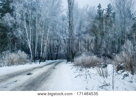 Country road in winter frosty forest. Hoarfrost and rime