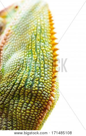 Yemen chameleon muzzle isolated on white background