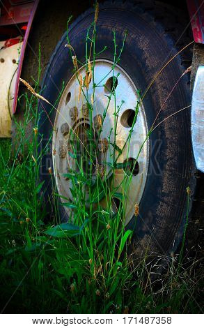 Old Oregon logging truck wheel with weeds growing around tire, in a field, idle.