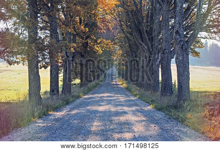 Countryside road among old oak trees, autumn, Europe. Image slightly toned for inspiration of retro style