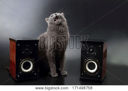 gray cat with open mouth singing with two stereo audio speakers