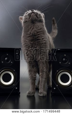 grey cat sitting with two stereo audio speakers