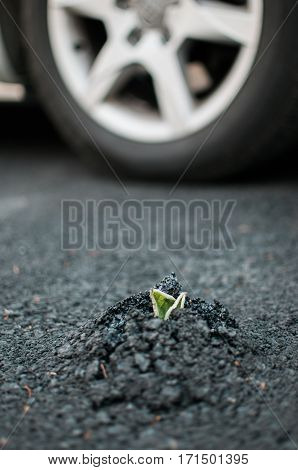 Plant sprouting through asphalt road with a car wheel in the background