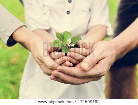 Kid Gardening Greenery Growing Leisure