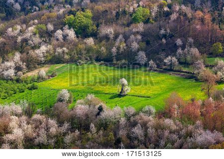 View from above on green field among trees in spring in Piedmont, Northern Italy.