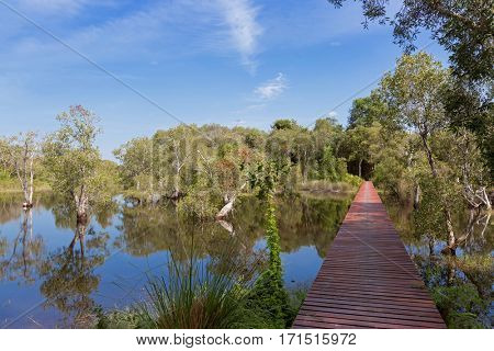 Simple boardwalk, wooden walkway across flooded forest. Wooden path crossing through Cajuput, white Samet trees growing in Swamp against blue sky in Rayong, Thailand
