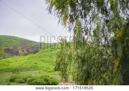 Beautiful Nature Landscape On Ascot Hills Park