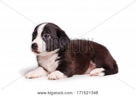 Cute puppy not purebred sad look. Pets need our support and care. The owner search
