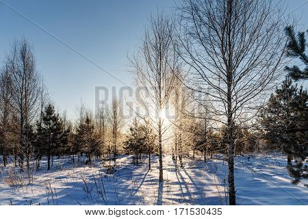 landscape in the woods on a sunny winter day