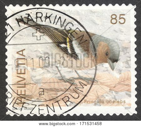 MOSCOW RUSSIA - CIRCA JANUARY 2017: a post stamp printed in SWITZERLAND shows Chaffinch (Fringilla coelebs) the series
