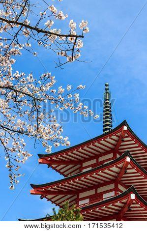 Chureito Pagoda or Red Pagoda with sakura in spring.
