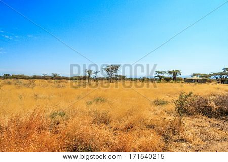 A view of african savannah. Yellow and dry plants and trees.