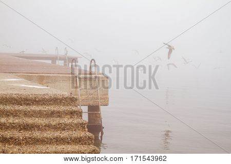 A concreate pier old rusty stairs and seagulls in foggy day