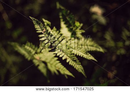 close-up of fern leaves under sunlight in the woods