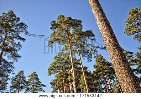 Crane Erects A Building Under Construction On The Background Of The Forest Of Pines And Blue Summer