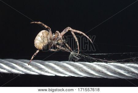 spider walks on a metal rope in the night