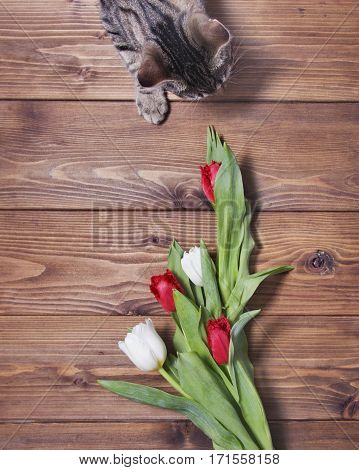 tabby cat with tulip flowers on wooden background