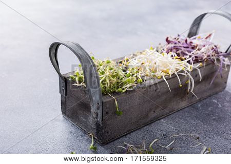 Assorted vegetable sprouts, broccoli, alfalfa, red cabbage in old box on gray stone background with copy space.
