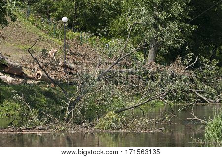 Damage (broken trees) after summer storm (in Poland)