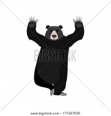 Baribal Yogi. American Black Bear Yoga. Wild Animal Zen And Relaxation