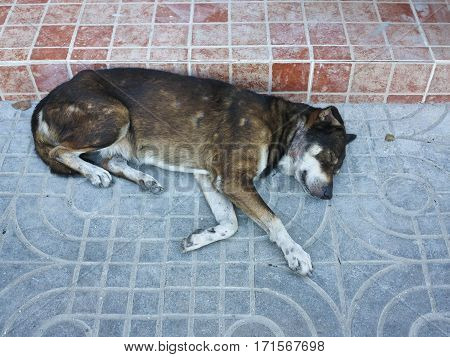 Alone homeless old brown dog sleeping on the street