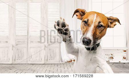 dog background image dog call someone to wait or something